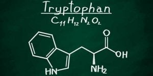 tryptofan finns i