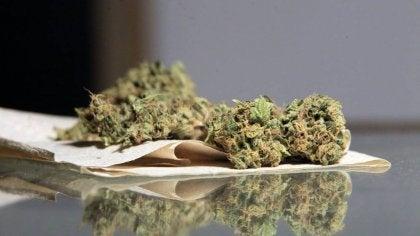 Marijuana på papper