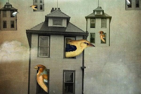 Fåglar i hus