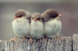 Tre typer av vänskap