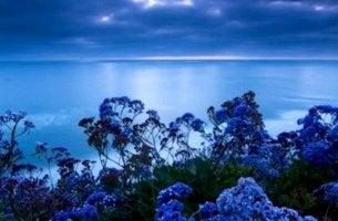 Hav med blå blommor