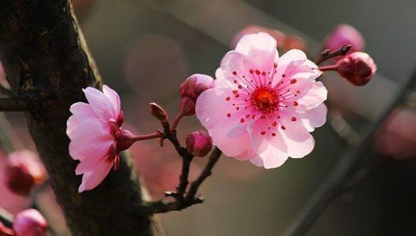 De 5 grundstenarna hos den japanska psykologin