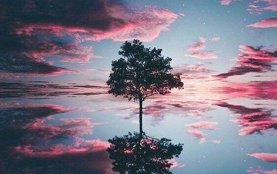 Ensamt träd i vatten