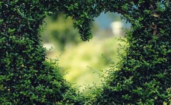 Hjärta i häck