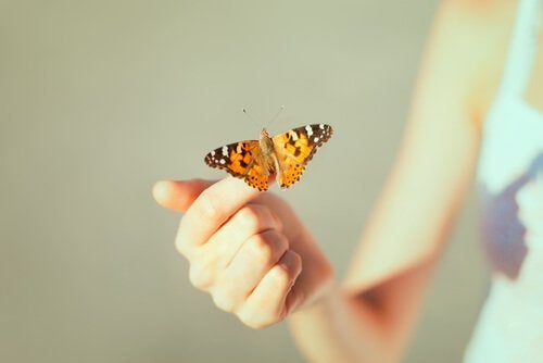 Orange fjäril