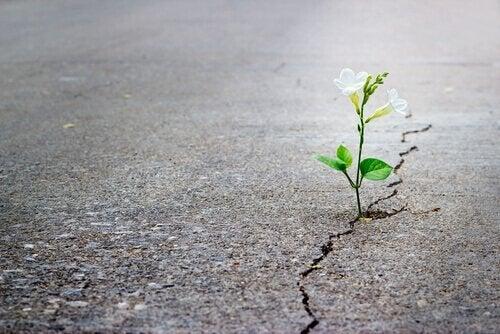 Blomma som växer upp ur en väg.