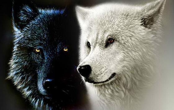 Cherokeelegenden med de två vargarna.