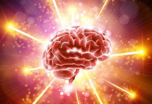 Den fantastiska hjärnan