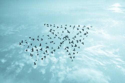Fåglar formade som en pil