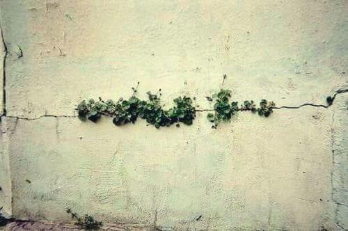Ogräs i betong