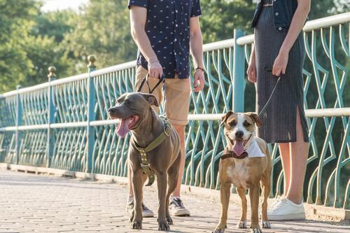 Personer på hundpromenad