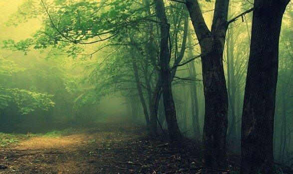 Grön och dunkel skog