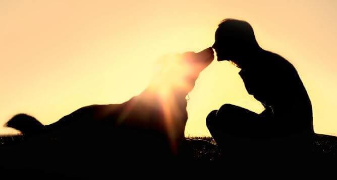 Hund som nosar på kvinna.