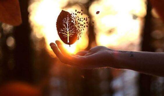 Löv som svävar över en hand.