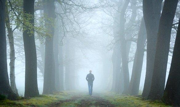 Teorin med skogstestet och psykoanalysen