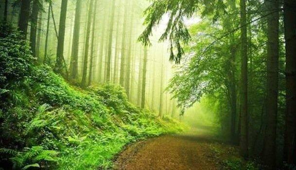 Skogsväg och träd.