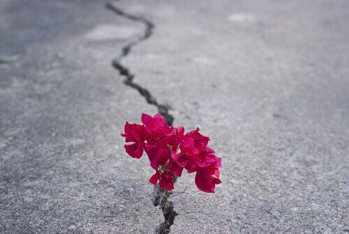 Blomma som växer upp från marken.