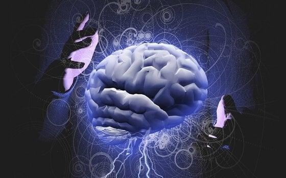 Ett par händer som håller en hjärna.