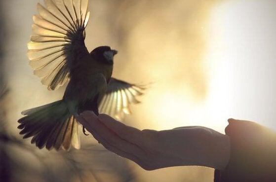 Fågel som sitter i handen.