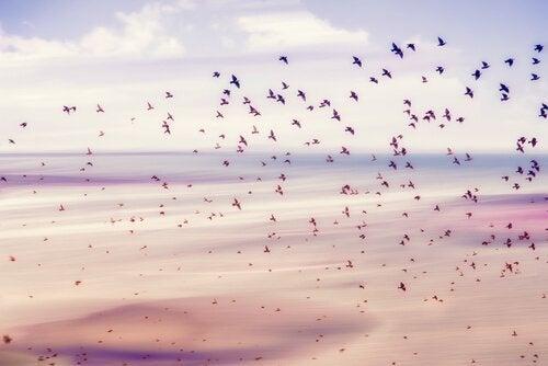 Fåglar njuter av friheten