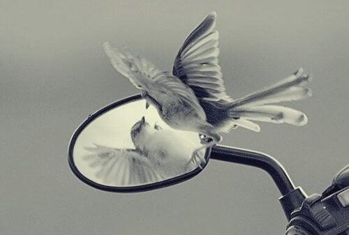 Egofällor blockerar vår frihet och personliga utveckling