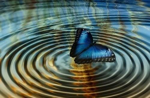 """Kaosteorins implikationer, eller """"Fjärilseffekten"""""""