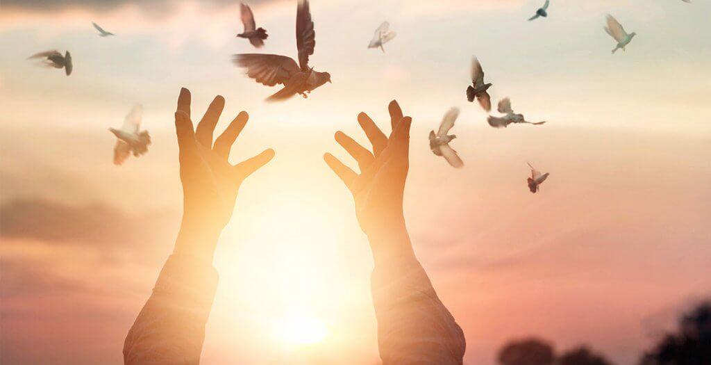 Händer som försöker fånga duvor.