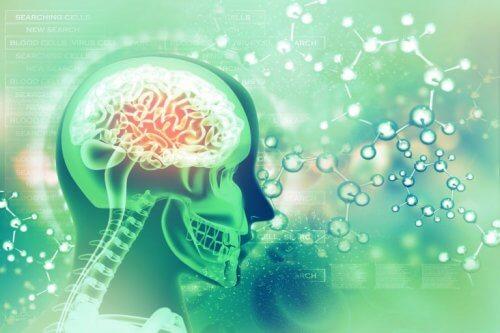Kemiska reaktioner i hjärnan