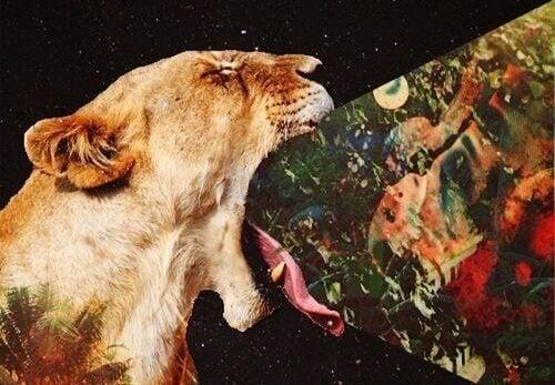 Lejon försöker svälja