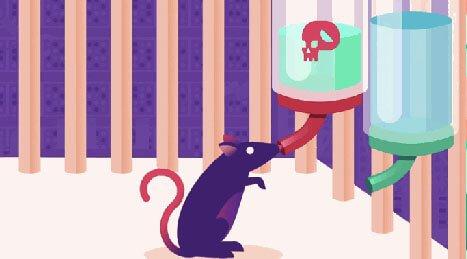 Råtta som dricker av vatten med droger i