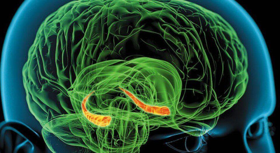 Schematisk bild av grön hjärna.