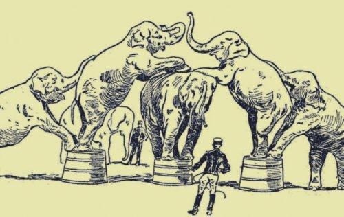 Elefanter uppträder på en cirkus