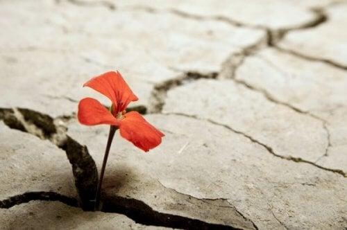 Blomma i lera