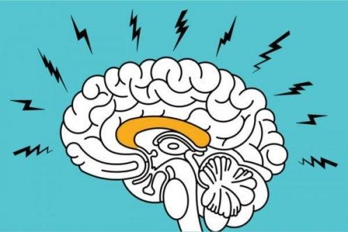 Hippocampus är kopplad till emotionella minnen