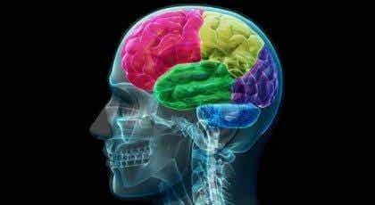 Missbrukarens hjärna: anatomin hos tvång och begär