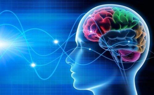REM-sömn i hjärnan