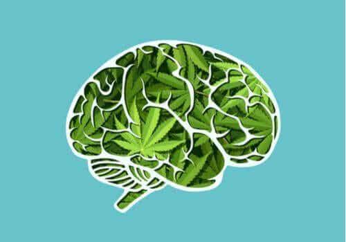 Cannabis långsiktiga effekter på hjärnan