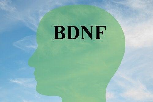 Hur man ökar BDNF, ett viktigt protein för hjärncellerna
