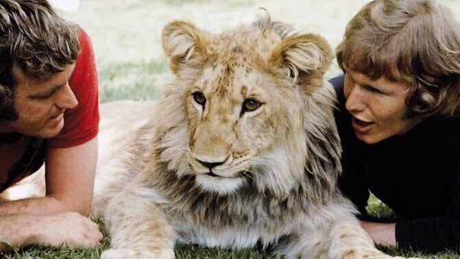 Den hjärtevärmande historien om lejonet Christian