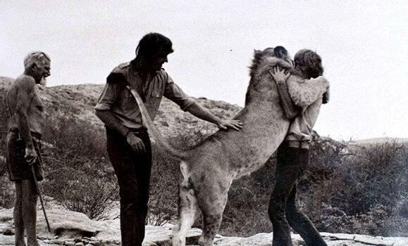 Lejonet Christian kramar vårdpersonal