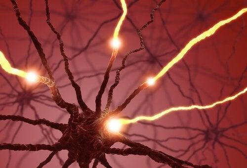 Elektriska impulser i neuroner