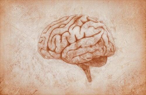 Teckning av hjärna.
