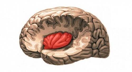 Del av hjärnan.