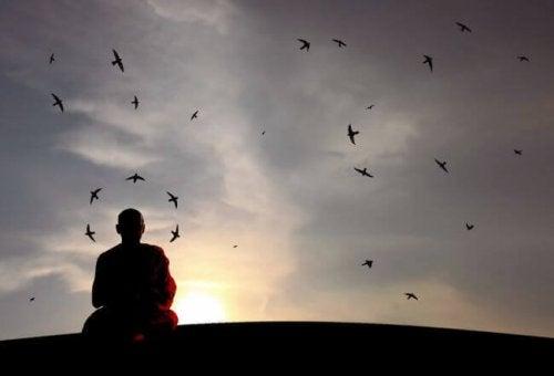 Fåglar runt munk