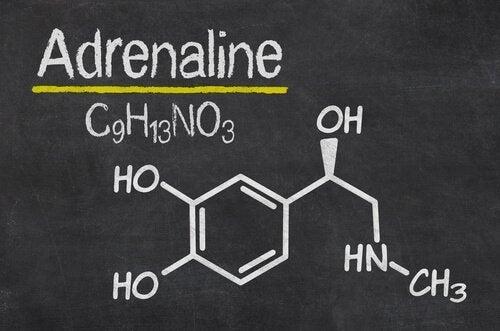 Adrenalinets struktur
