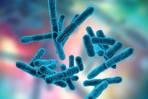 Bakterier i kroppen.