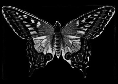 Svartvit fjäril