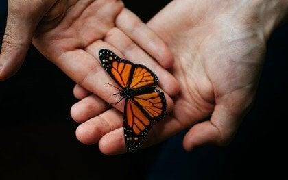 Terapeutiskt ackompanjemang: ett viktig redskap