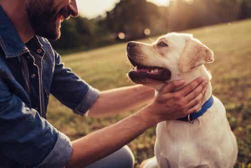 Tre hundberättelser som faktiskt är sanna