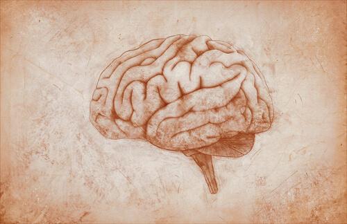 Motoriska hjärnbarken: egenskaper och funktioner